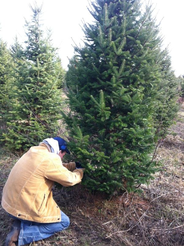 geoff cutting tree
